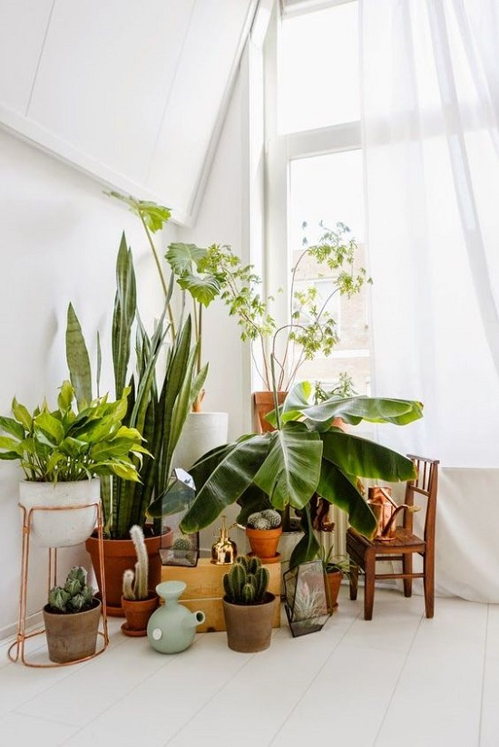 7 Different Way to Indoor Plants Decoration Ideas in Living Room