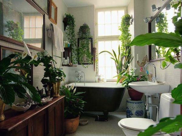 99 Great Ideas to display Houseplants | Indoor Plants Decoration