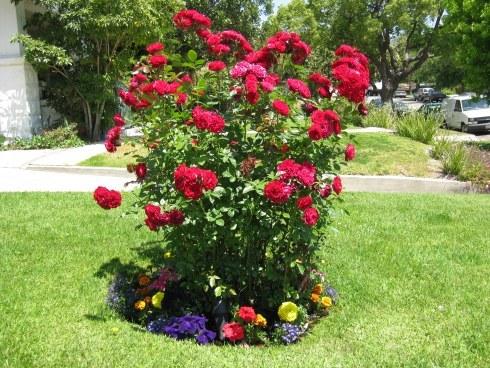 Rose Flower Garden Ideas 1