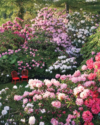 The Secrets of Martha's Rose Garden | Martha Stewart