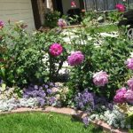 Rose Flower Garden Ideas