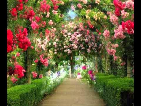 Rose garden design ideas - YouTube