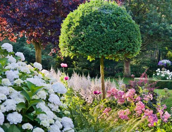 An Elegant Summer Garden Idea with Hydrangea, Rose and Astilbe