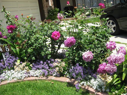 A Pretty Small Garden Bed With Roses And Annuals | A Walk Through My